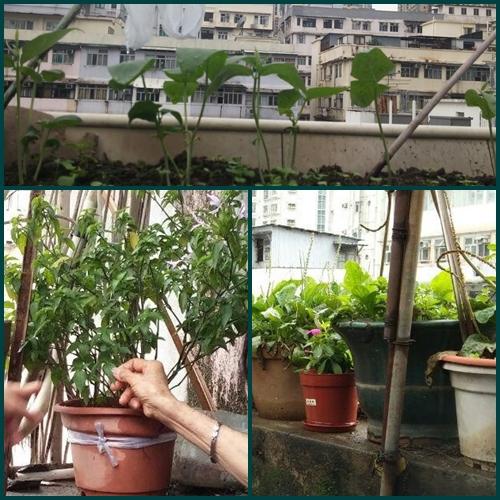 植物合成一.jpg